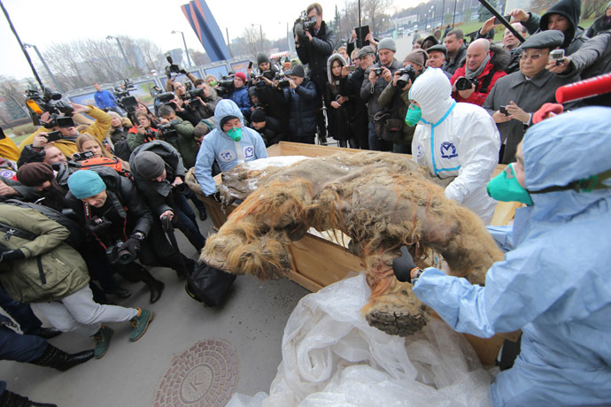 Famous Yakutian baby mammoth delivered to Central Artist House