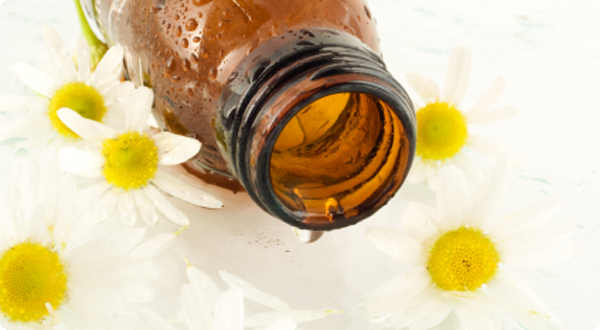 Chamomile Essential Oil Shown To Kill up to 93 Percent of Breast Cancer Cells
