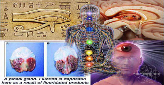 clean-pineal-gland