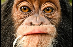 Scientists Sign Declaration That Animals Have Conscious Awareness, Just Like Humans