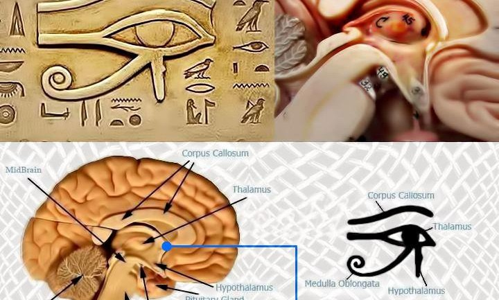 How to Detox Your Pineal Gland – Fluoride, Mercury