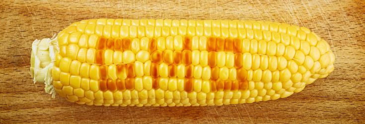 Biotech Hit With Billion Dollar Lawsuit for 'Ruining Corn Industry'