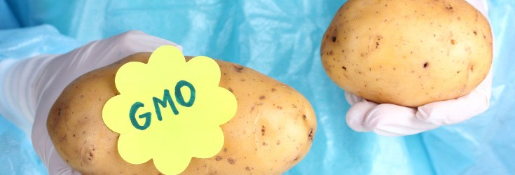 US Approves First Genetically Modified Potato for Planting….How to Tell if You're Buying the New GMO Potato