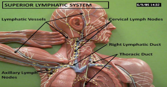 Clean Your Body's Drains: 11 Ways To Detoxify Your Lymphatic System