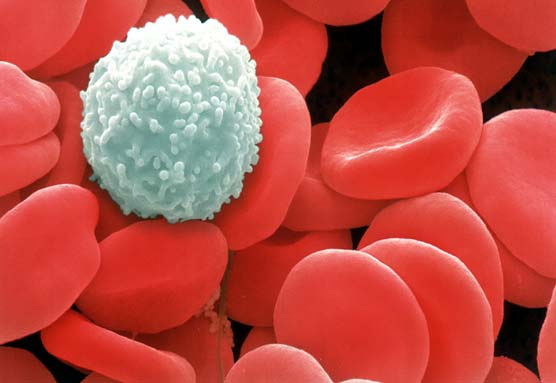 Ways To Increase White Blood Cell Count Naturally