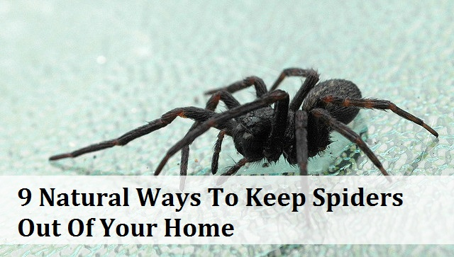 keep-spiders-out-of-your-home