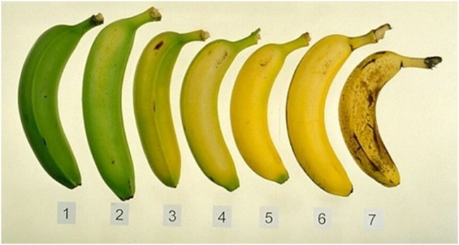 Ripe vs. Unripe Bananas: Which are Better for You?