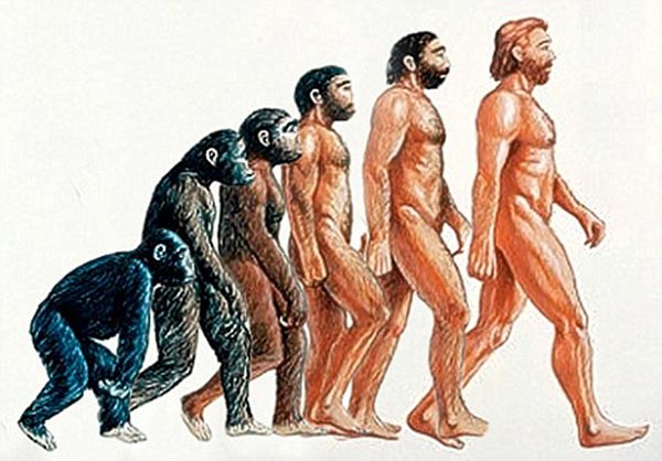 Humans-Evolved-from-Apes