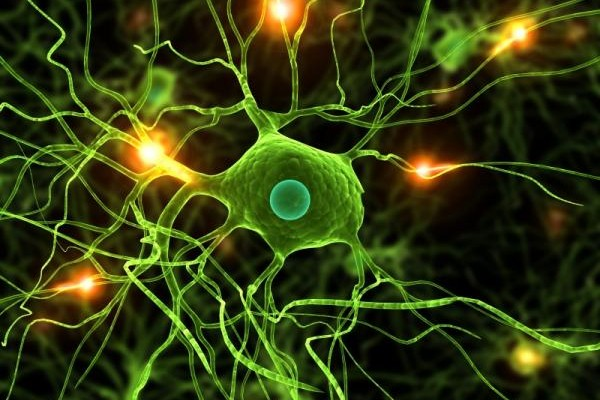 Active Component Of Cannabis Can Regrow Brain Cells
