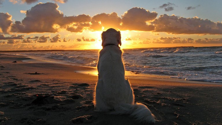 dog-sunset