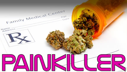 Marijuana Decreases Death Rates From Pain Killers By Over 30 Percent
