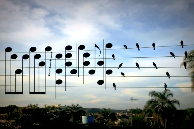 A Man Took This Photograph Of Birds, And Turned Their Positions Into Musical Notes