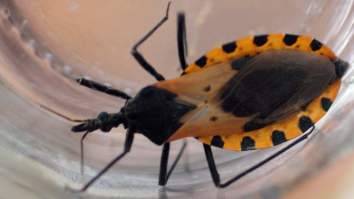 Blood-Sucking 'Kissing Bug' has Infected 300k Americans with Deadly Disease