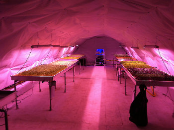 Growing Underground: The Food Revolution Happening Beneath Your Feet