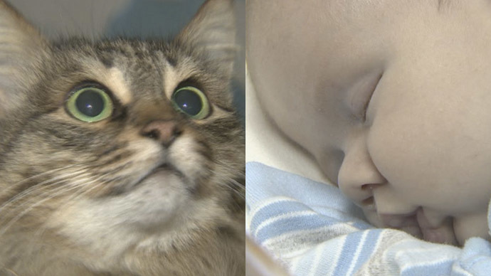 Kitty Rescue: Homeless Cat Praised For Saving Abandoned Baby in Russia