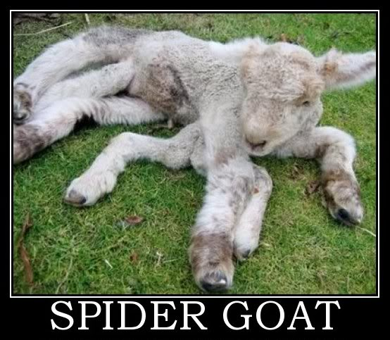 SpiderGoat