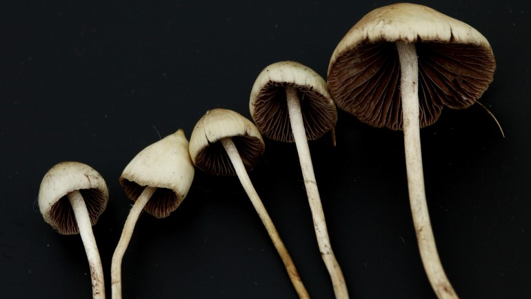 Scientists Studied What Psychedelics Do To The Brain And It's Not What You've Been Told