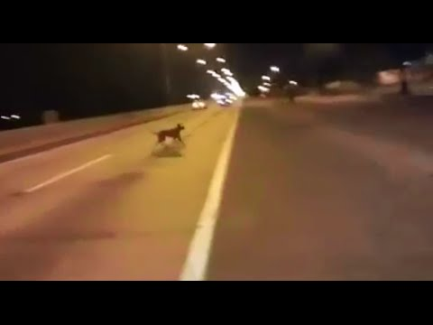 Dog Teleports Out Of Nowhere During A Street Race In Chile