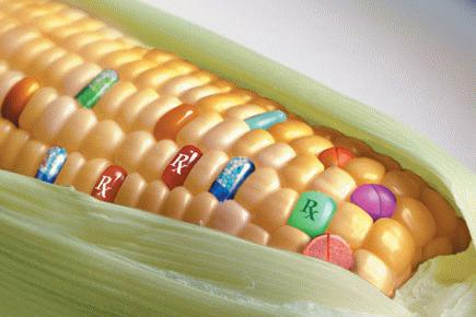 GM Corn and Soy Cause Damage To Liver, Kidneys, DNA, Reproduction & Blood According To New Study