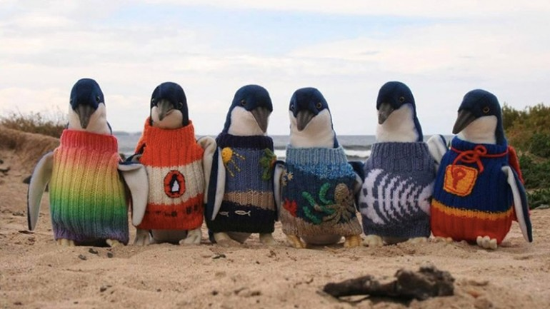 109 Year Old Man Knits Tiny Sweaters To Save The Lives Of Penguins