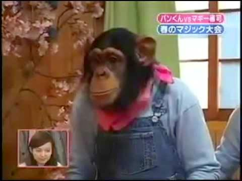 Chimp's Mind Is Blown Away By Magic Tricks