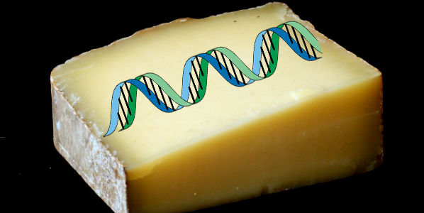 Milk Free GMO Cheese Made Using Human DNA Strands
