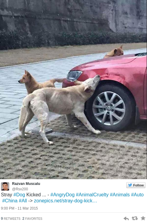 Canine karma Dog kicked by driver brings pack of friends to trash his car — RT News