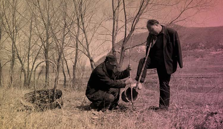 A Blind Man And His Armless Companion Plant Over 10,000 Trees in China