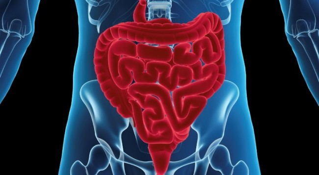 How Your Digestion Controls Your Immune System