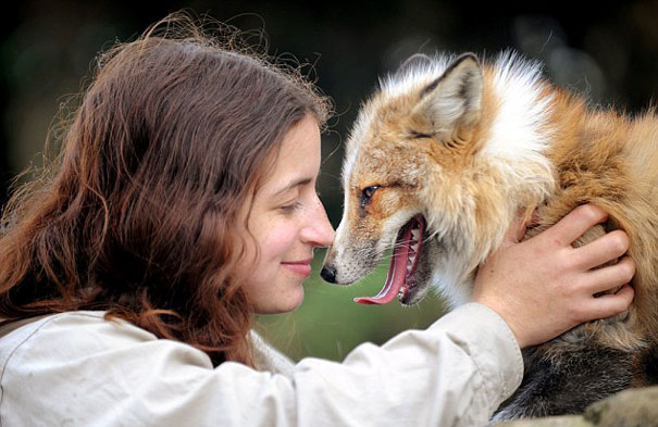 rescued-tame-pet-fox-cub-todd-emma-dsylva-3
