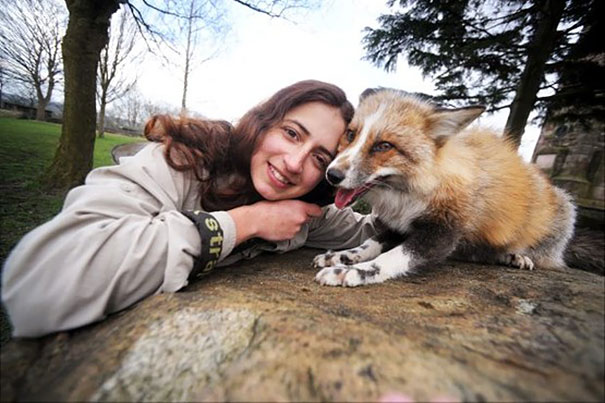 rescued-tame-pet-fox-cub-todd-emma-dsylva-4
