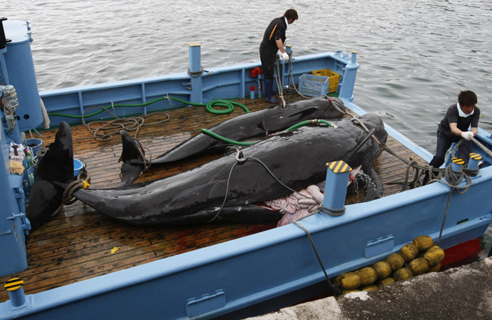 To match feature WHALING/JAPAN