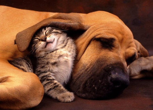 21 Unlikely Sleeping Buddies That Will Melt Your Heart