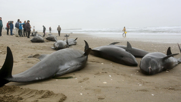 150 Dolphins Feared Dead After Mass Beaching in Japan