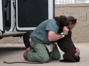 When You See What This Inmate Does For A Dog In Need Of Help, You'll Be In Tears