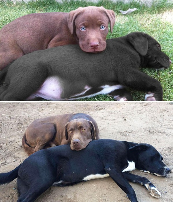 XX-before-and-after-dogs-growing-up-12__880
