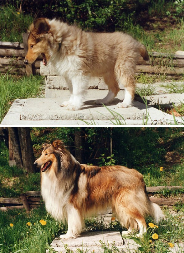 animals-before-after-growing-up-5
