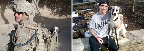 animals-before-after-then-now-49