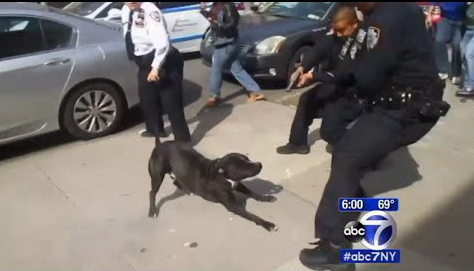 Cops go to Wrong House to Make Arrest, Let Dog Out, Shoot at Dog in Crowded Area