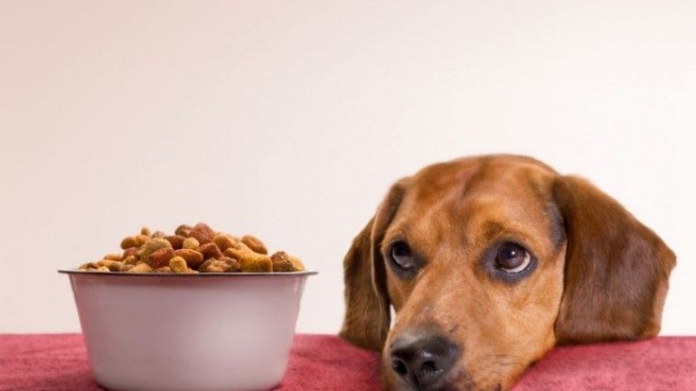 The Benefits of Feeding your Dog Organic Food