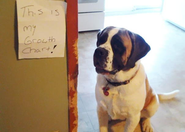 Dogs Being Shamed For Their Crimes