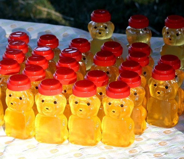 honey_bears_in_the_sun