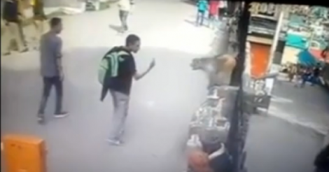 Monkey DropKicks Young Man After The Guy Flashes The Finger