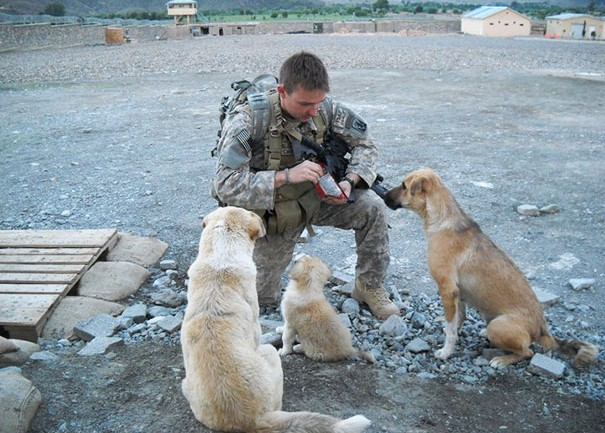 Soldiers And Pets Who Became Best Friends Overseas