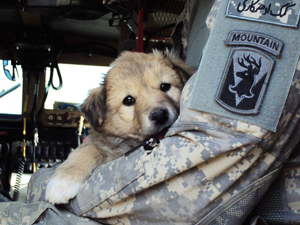 soldier-with-pet-3__605