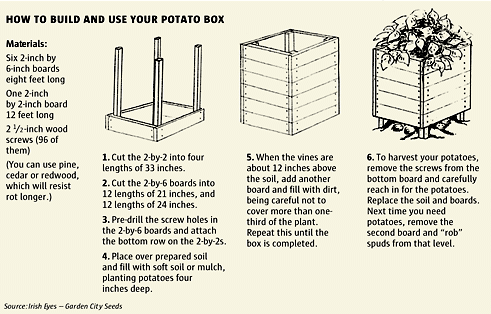 How To Grow Your Own Organic Potatoes In Just 4 Square Feet
