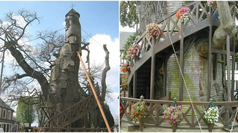 The Oldest Tree in France Is Actually a Charming Chapel