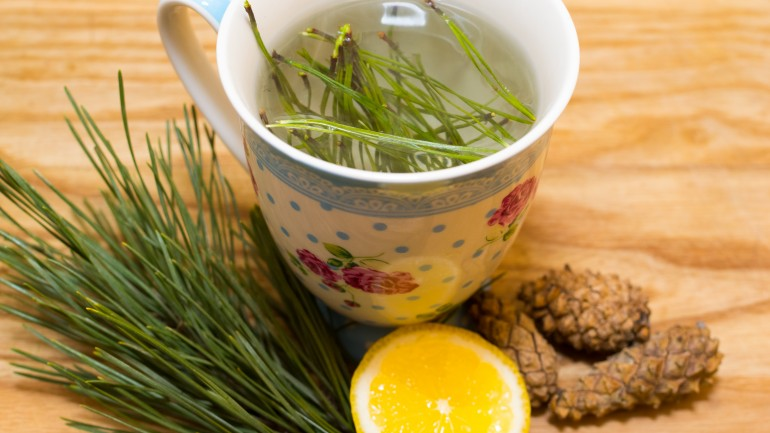 Pine Needle Tea: Fortify Yourself With This Unusual Cancer Killer And All Around Health Tonic