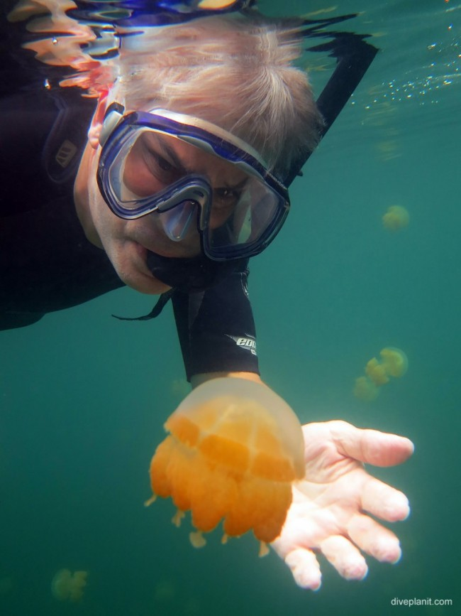Snorkeler-admiring-a-jellyfish-showing-the-size-of-the-jellyfish-in-Jellyfish-Lake-Koror-Palau-DPI-0312-768x1024