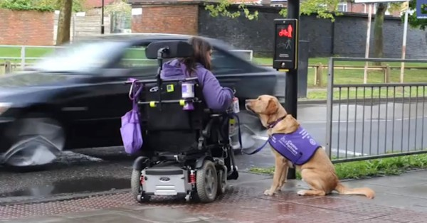 Super-Dog-Is-Disabled-Woman-Carer-1